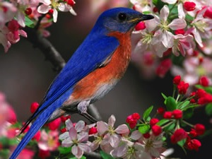With spring buds popping, bluebird houses are seeing activity in the Southeast