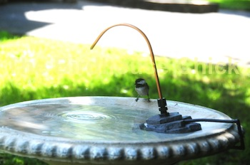 Copper bird bath dripper