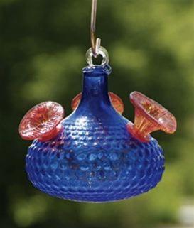 Cobalt Radiance was one one of the cooler bird brain hummingbird feeders