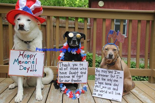 Even Tilly and her Buds Observe Memorial Day