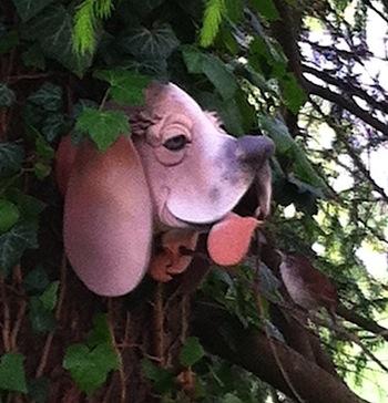 A Carolina Wren checks out possible vacancies at decorative bird houses