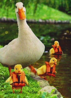 We salute all moms protecting their babies from harm's way