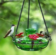 Are you seeing smaller numbers at your Hummingbird Feeders this year?