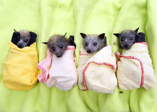 baby bats snuggled in for the night, but they really do use bat houses