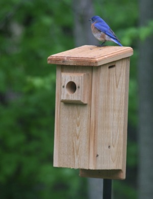 Some blue bird houses are seeing third or fourth clutch od the season!
