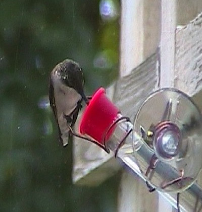 tiny sprite at window hummingbird feeder