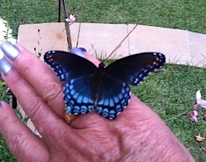 My hand as a butterfly feeder? Likely the salt
