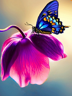 Possibly photoshopped, nature provides many butterfly feeders