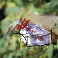 The Flower Box offers multiple ports, although it's not one of the BirdBrain Hummingbird Feeders