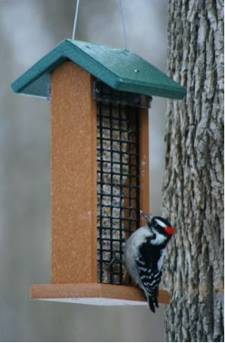 Double Suet Feeder works for peanuts, nesting material and fruit in summer.