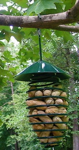Many peanut feeders also accommodate fruit and nesting material