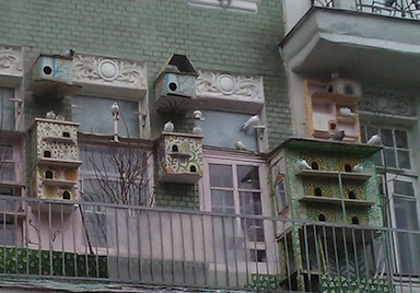 Will they find your window bird feeders on the seventh floor?