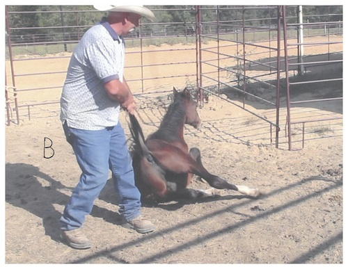 Government's underhanded deals continue with wild horses