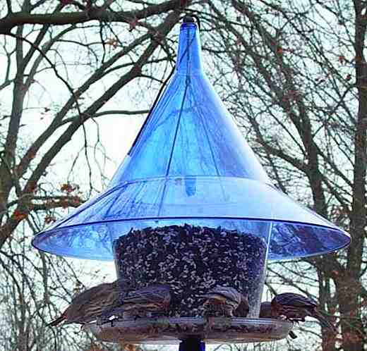 Feeders with a built-in squirrel baffle will deter pesky squirrels from the start!