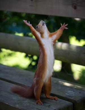 squirrel-happy
