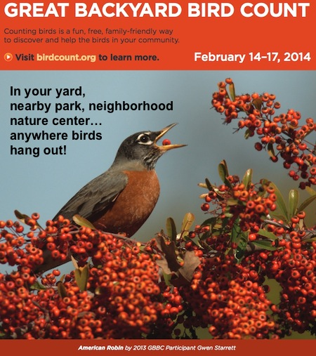 Great Backyard Bird Count Wants You!