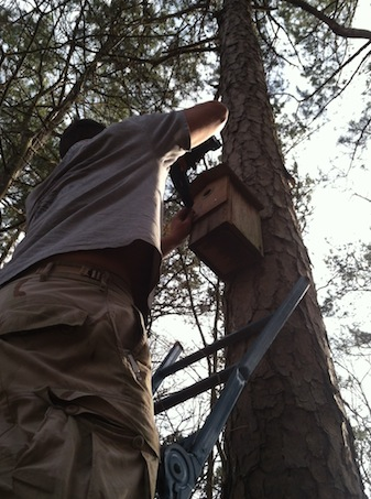 Time to clean and repair decorative birdhouses for nesting seeason