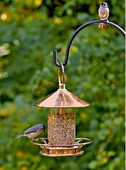 Some tube bird feeders feature generous hoppers and perching areas
