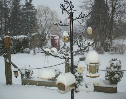 peanut bird feeders and every other feedersit covered in snow at dawn
