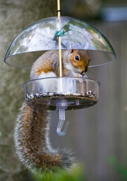 This feeder is definitely not squirrel proof!