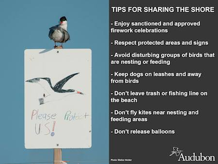 Audubon tips for sharing the beach