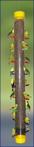 Rainbow Finch Feeder at full capacity
