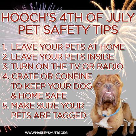 MarleysMutts 4th of July pet safety