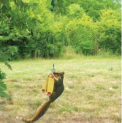 Bungees make for really fun squirrel feeders!