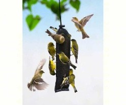 Mesh nyjer or thistle feeders are perfect for big crowds