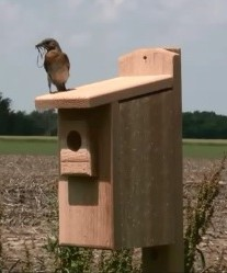 This bluebird nest box would benefit from a squirrel baffle