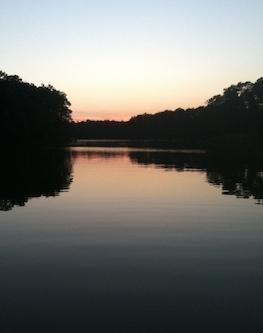At dusk, bats decended upon the boat