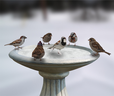 skating-birds-birdbaths