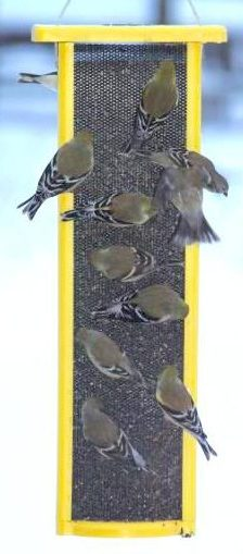 Finch Feeder with all-over screen