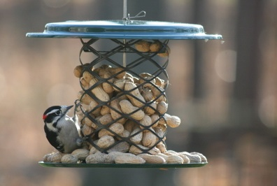 Smaller peanut bird feeder with tray