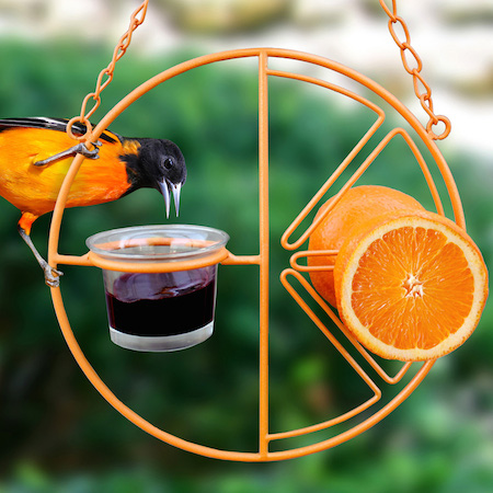 Oriole feeder with glass cup for jelly