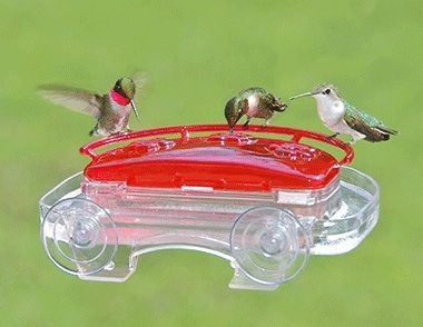 window-hummingbird feeder- can be quite versatile