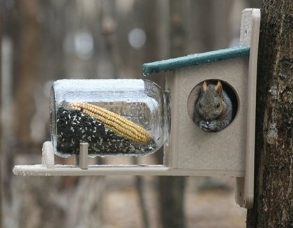 Squirrel feeders done in recycled plastic last much longer