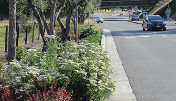 bee-highways-act petition supports pollinators