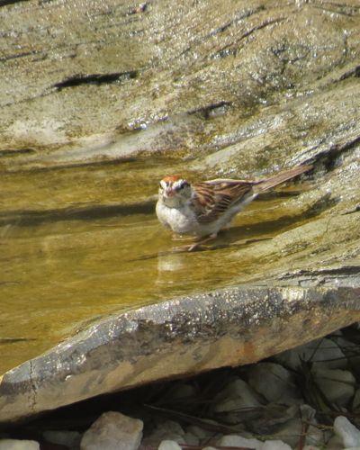 Natural Texture Birdbath But Water Is Too Warm