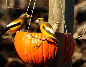 hanging pumpkin hopper bird feeder
