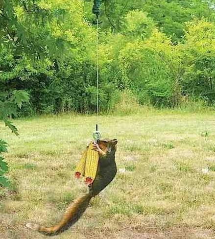 bungee-cord-squirrel-feeder