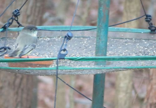 Small feeder dish sets atop this cool bird seed tray