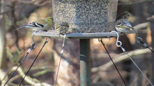 Large bird seed tray accommodates hanging or post-mount feeders