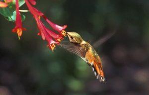 Sedona hummingbird festival 2016