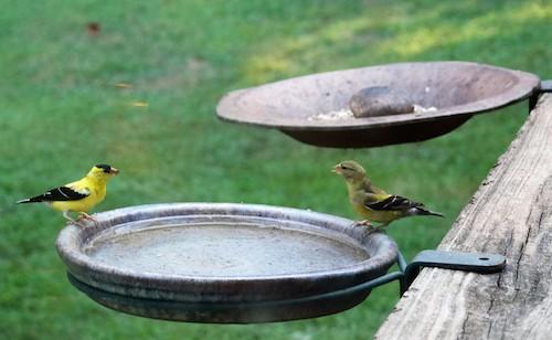 Bird Feeder Bracket for Deck Rail