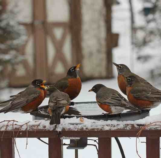 Give a heater or heated birdbath