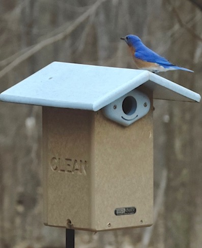 recycled blu bird house