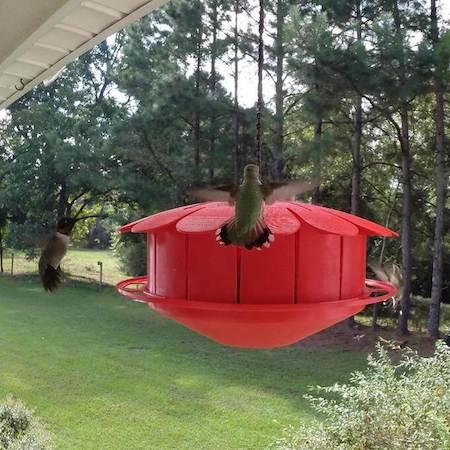 Humm-Bug Hummingbird Feeder