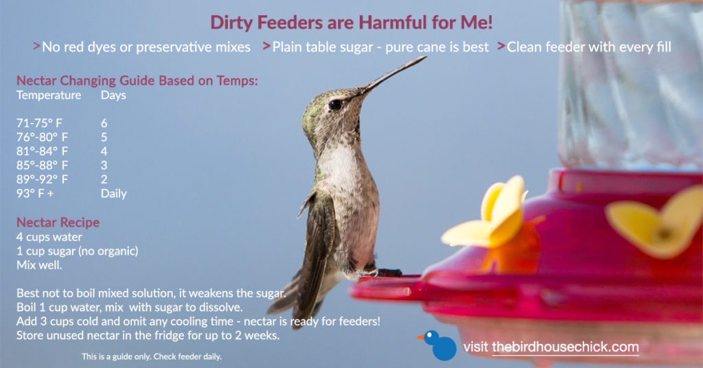 keep humming bird feeders fresh and clean