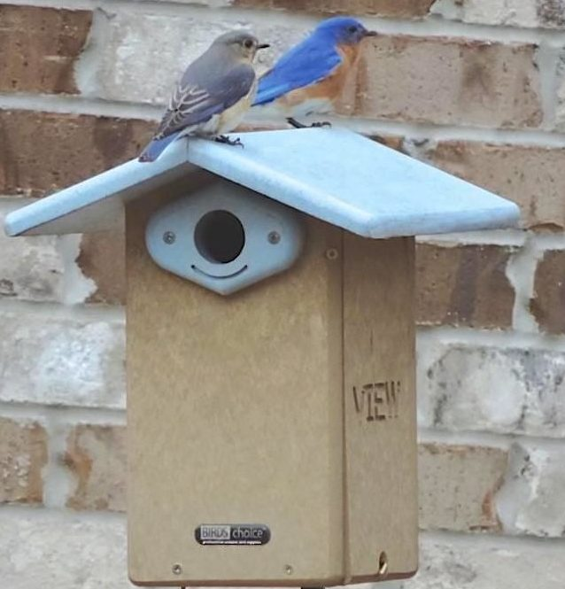 Recycled Plastic Bluebird House is NABS Approved